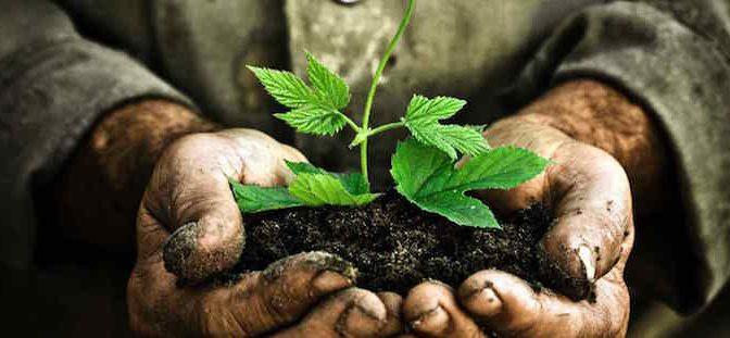 Planting Disciple Trees