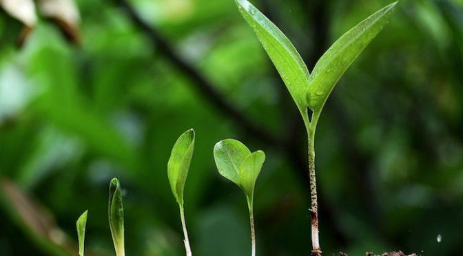 Christian Community – Growth